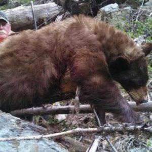 Montana Rifle Black Bear Hunt 10001